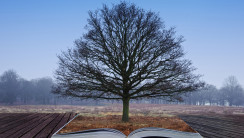 Single bare tree grows out of pages in magical book