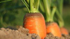 Необходимость совершенствования нормативной базы дляповышения эффективности государственной поддержки сельского хозяйства